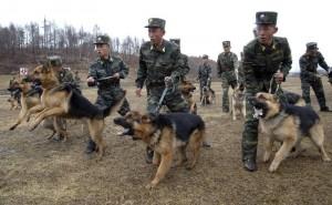 North Korea's increasingly belligerent behavior
